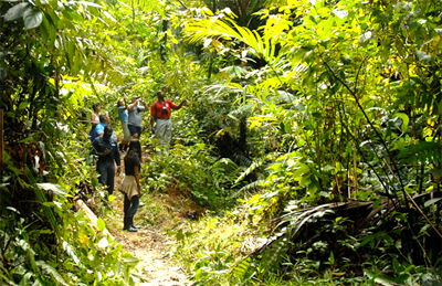 Rainforest hike, Tobago