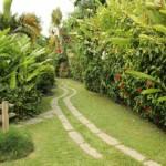 Kariwak garden path, Tobago